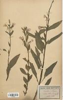 https://bibliotheque-virtuelle.bu.uca.fr/files/fichiers_bcu/Onagraceae_Oenothera_biennis_CLF113902.jpg