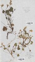 https://bibliotheque-virtuelle.bu.uca.fr/files/fichiers_bcu/Violaceae_Viola_x_intermedia_CLF114067.jpg