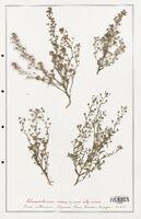 https://bibliotheque-virtuelle.bu.uca.fr/files/fichiers_bcu/Plantaginaceae_Chaenorrhinum_minus_CLF139093.jpg