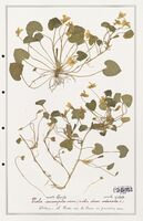 https://bibliotheque-virtuelle.bu.uca.fr/files/fichiers_bcu/Verbenaceae_Viola_incompta_CLF139316.jpg